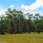 Caddo_Lake_5-25-13-47