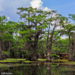 Caddo_Lake_5-25-13-63